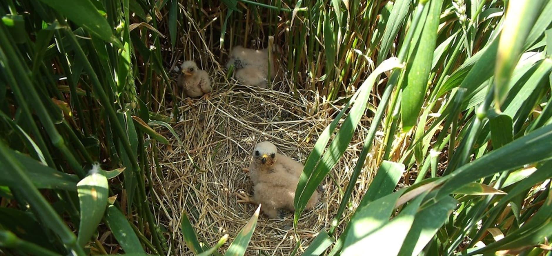 Jongen in beschermd nest