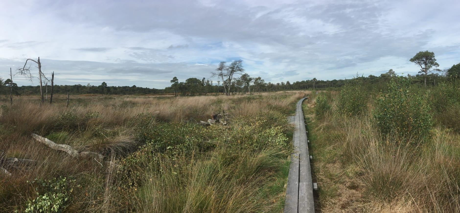 Verwijderen bosopslag en het Wooldse veen