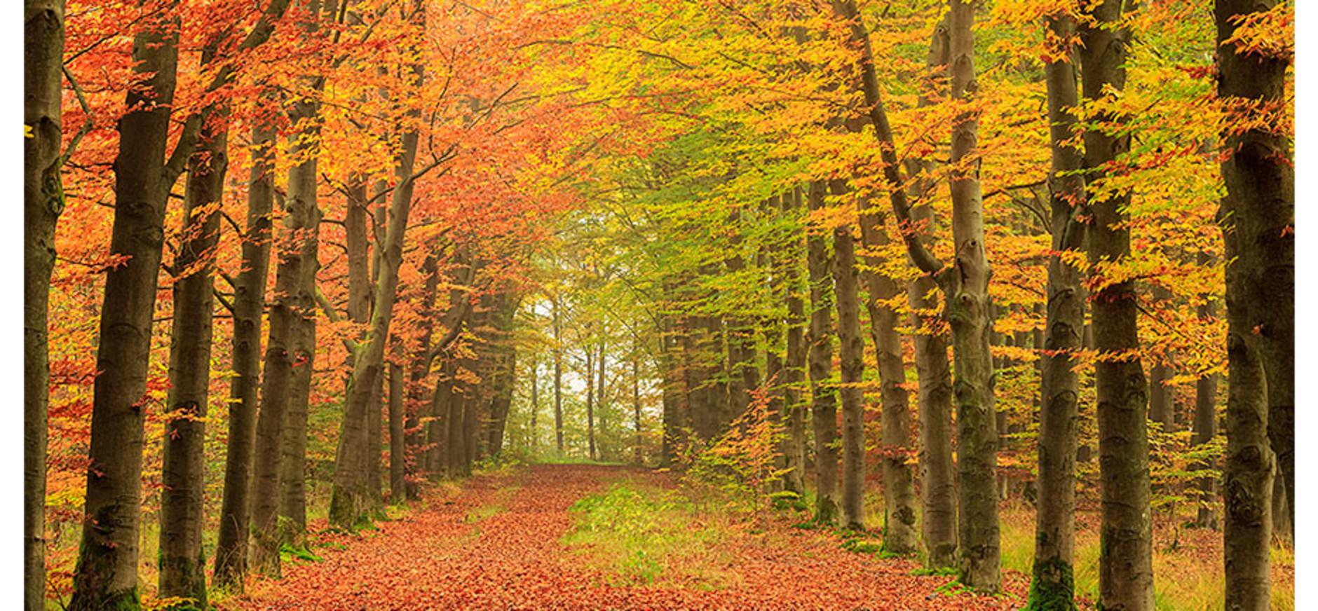 Twente herfst laan