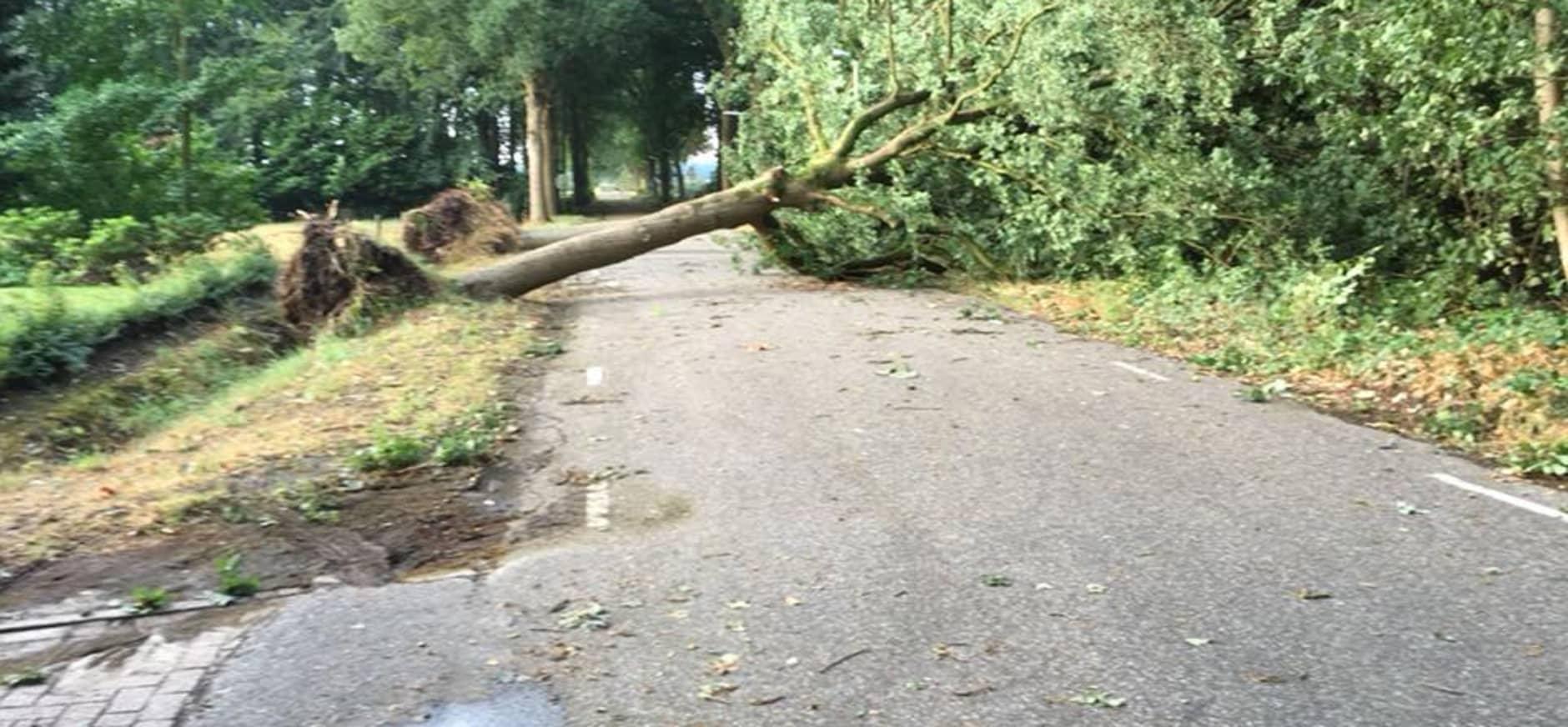 Omgewaaide boom op Visdonk