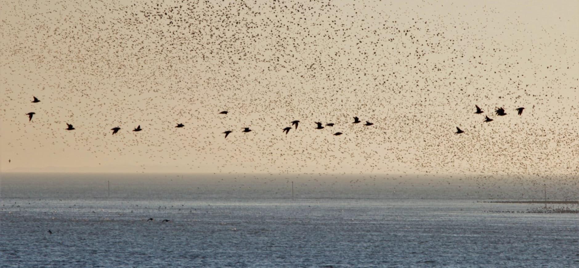 Richel met vogels
