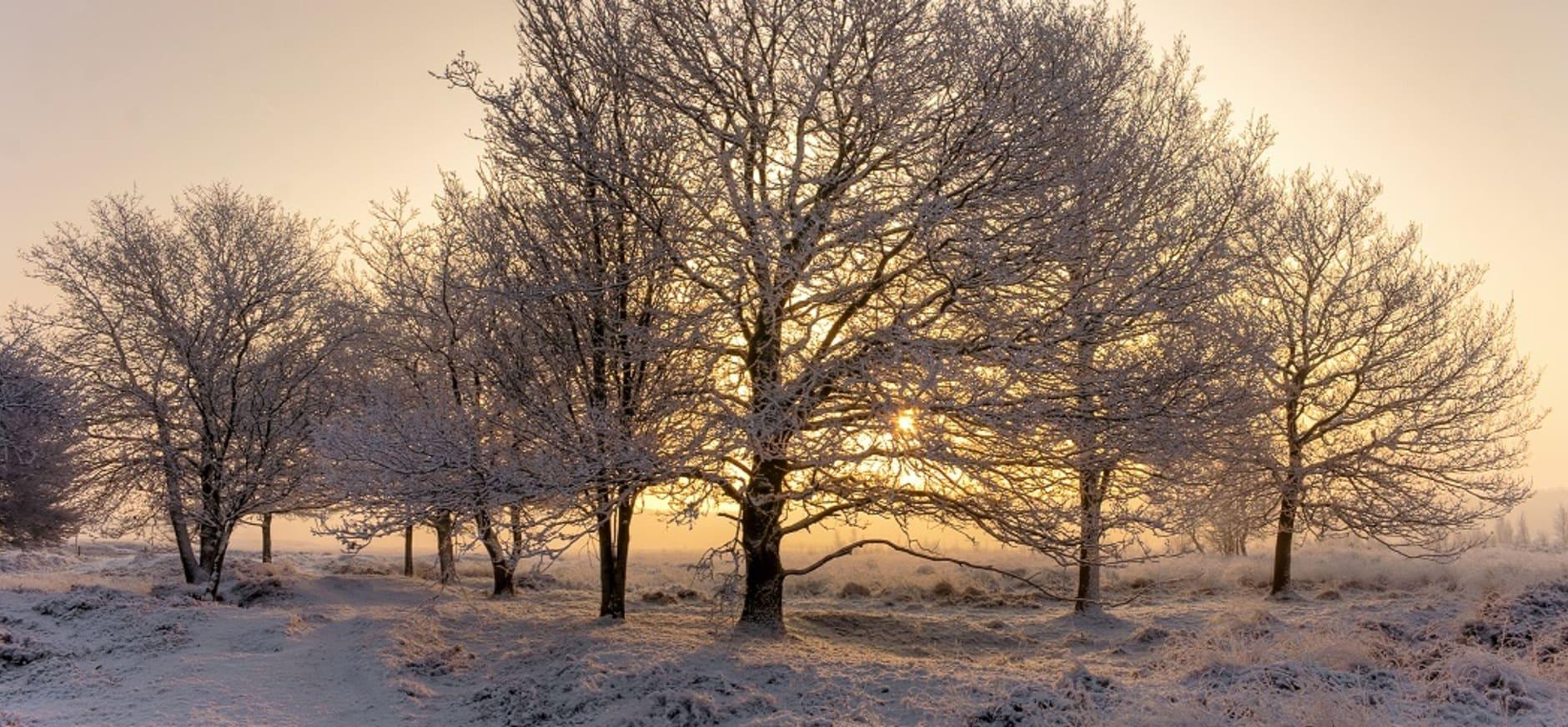 Winter Dwingelderveld