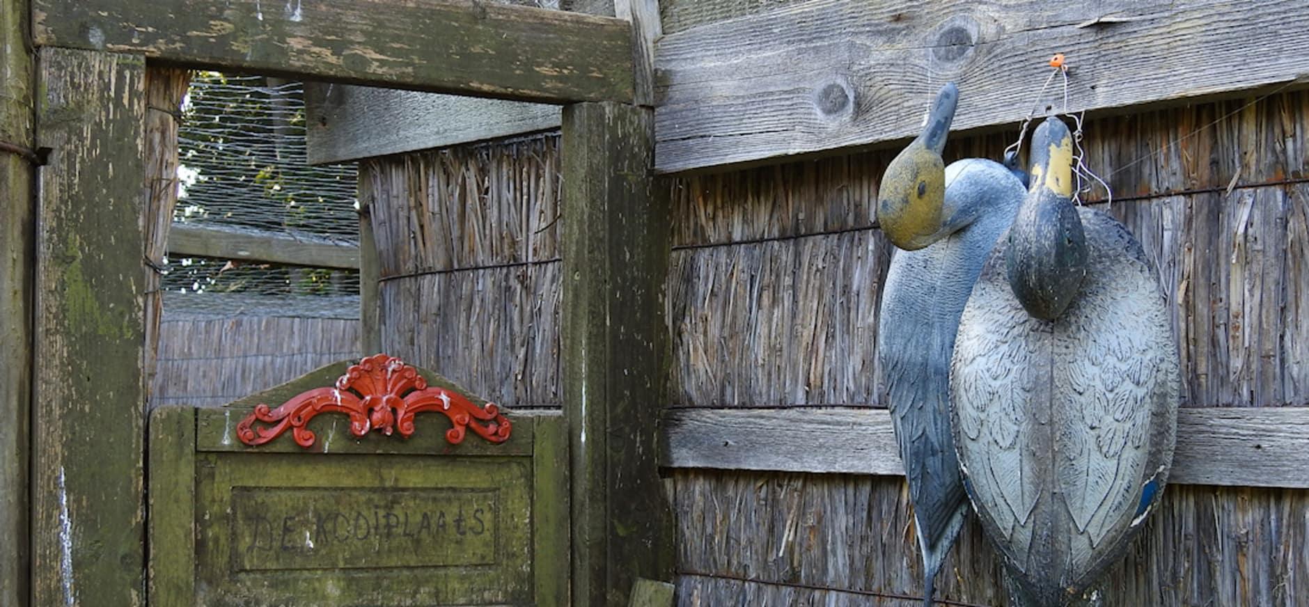vangpijp van de eendenkooi op Schiermonnikoog