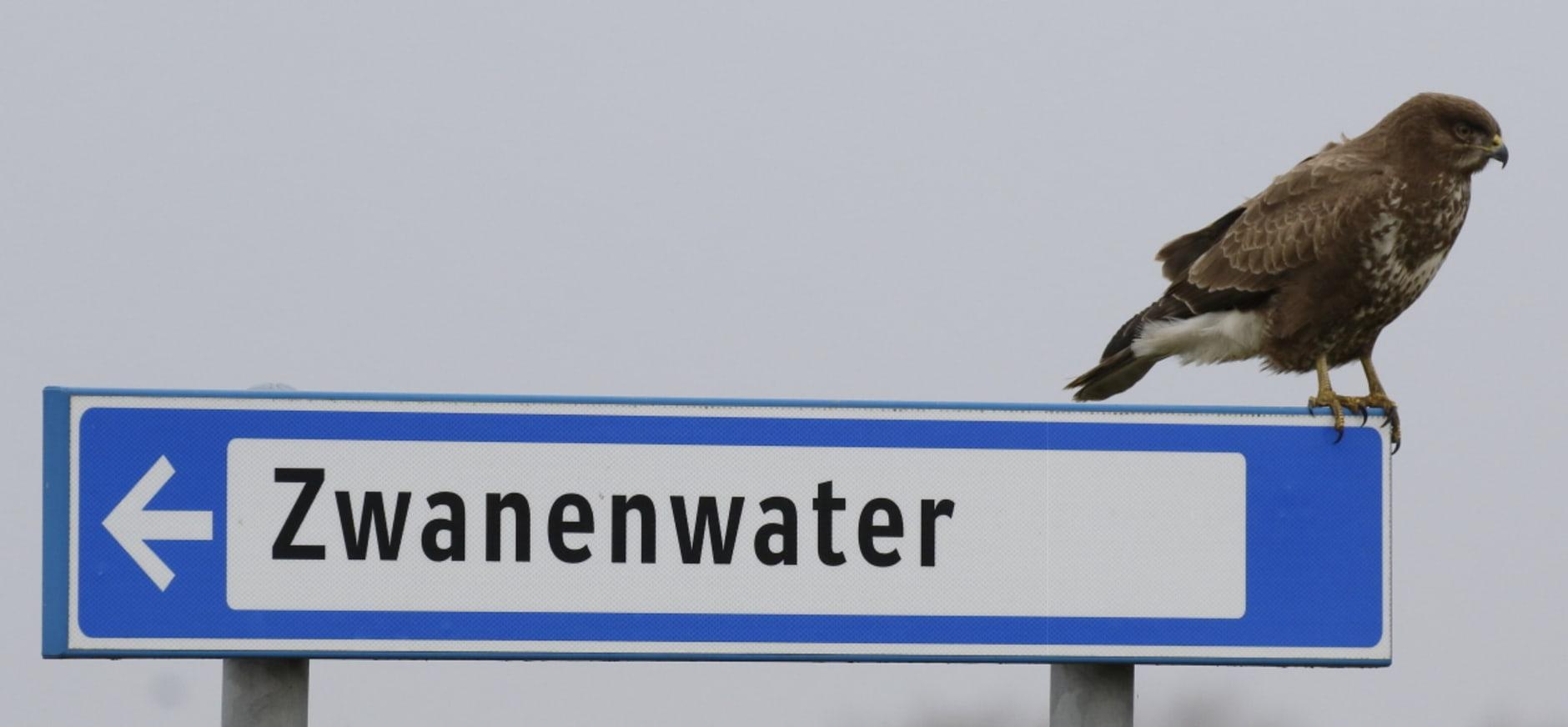 Zwanenwater