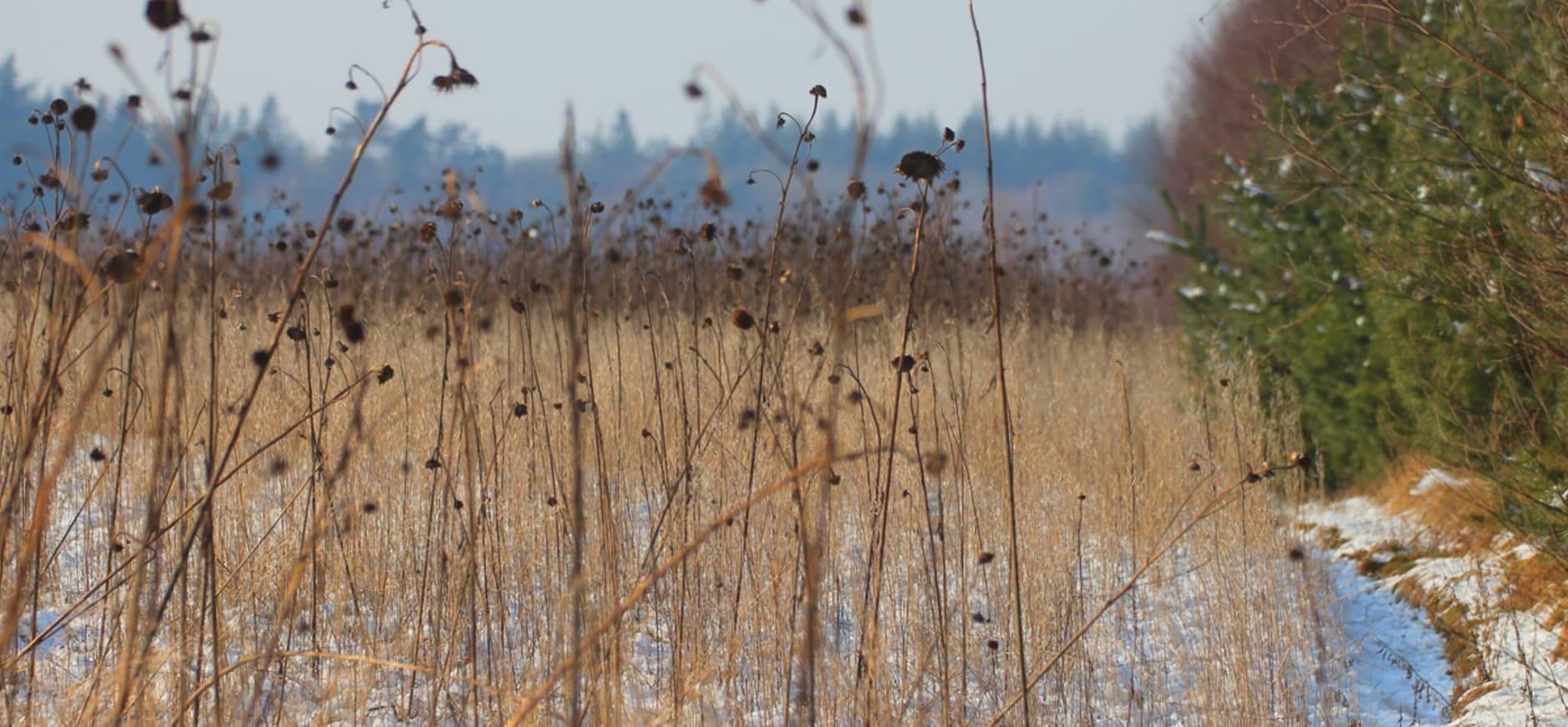 Winterakker Oud Reemst met granen en oliehoudende zaden