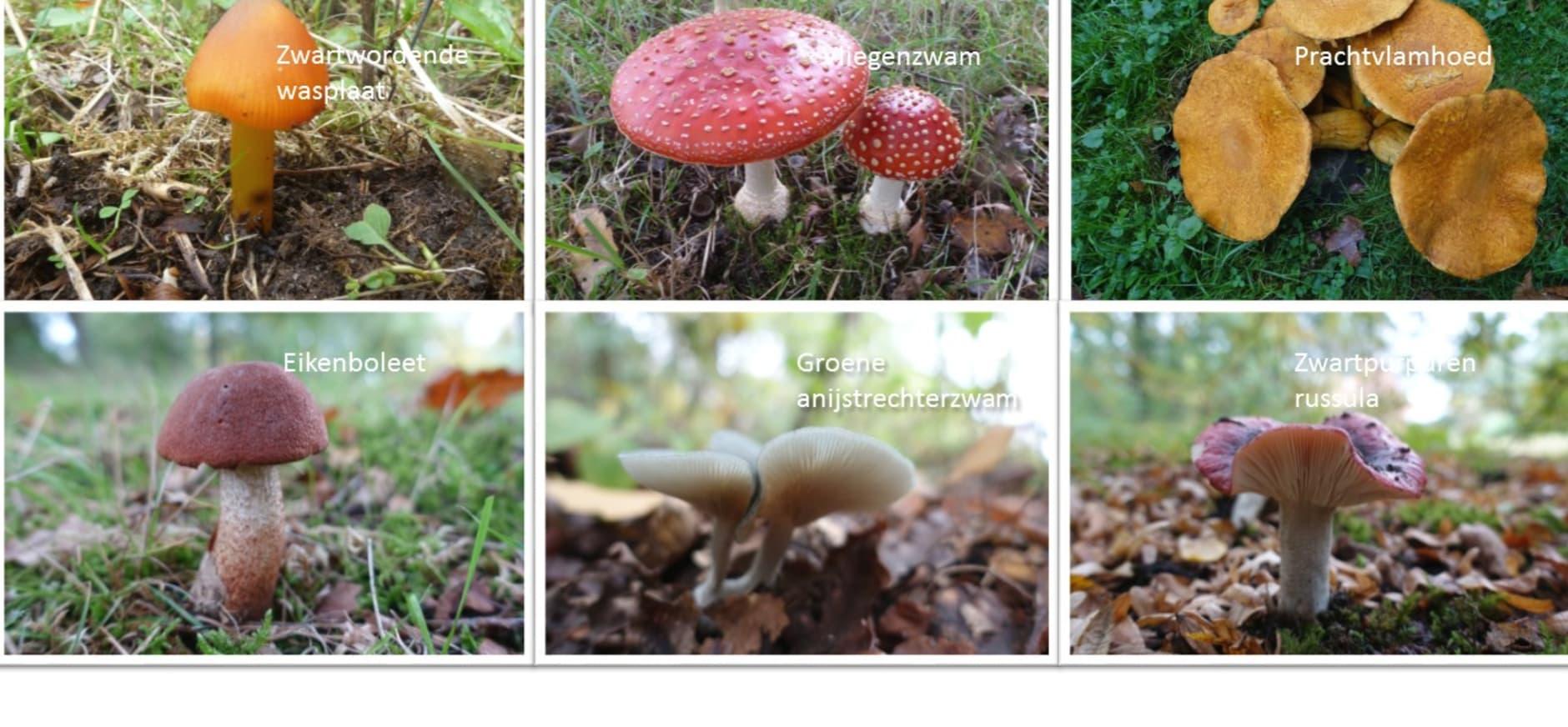 paddenstoelen arboretum