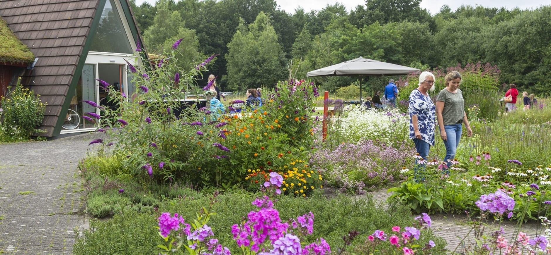 Vlindertuin bezoekerscentrum Dwingelderveld