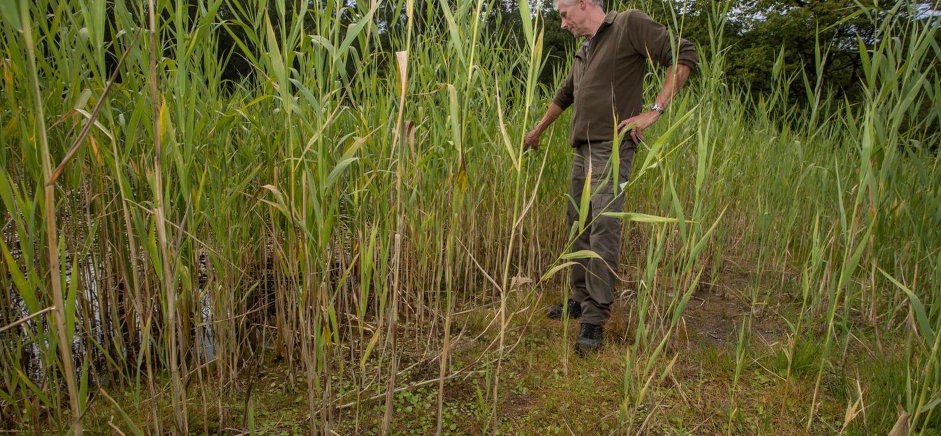 Boswachter Michiel Schaap wijst op gevolgen van droogte