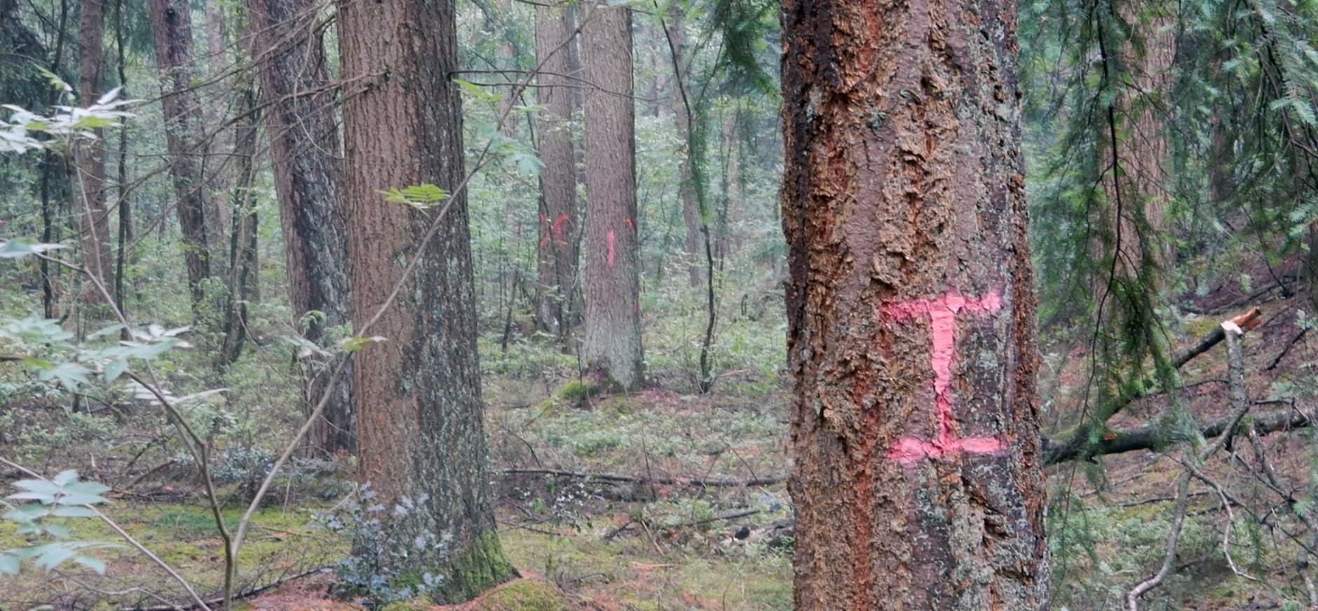 Gemarkeerde bomen Wolfheze bossen