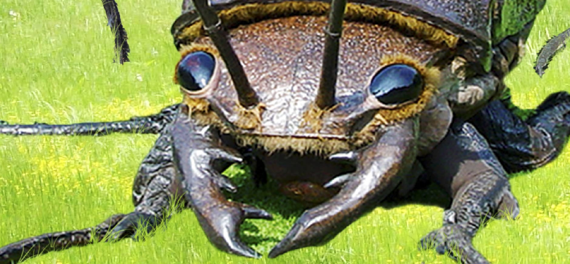 big bugs komen naar de wieden