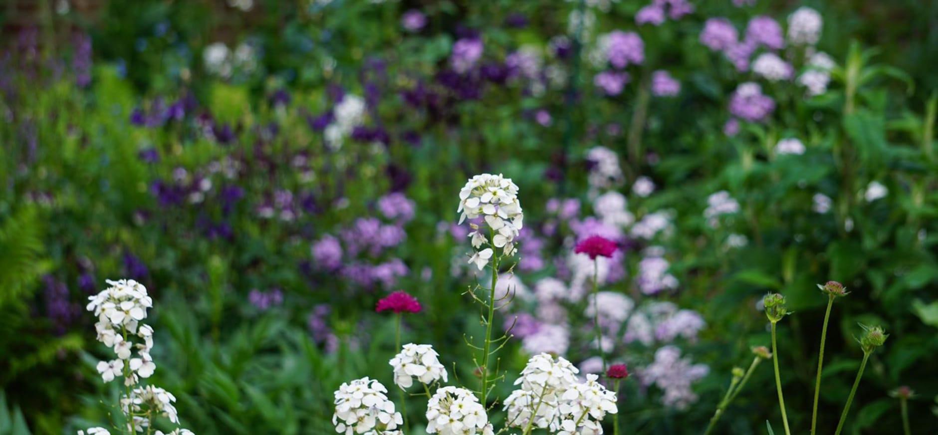 Levend bloemenboeket Sanne