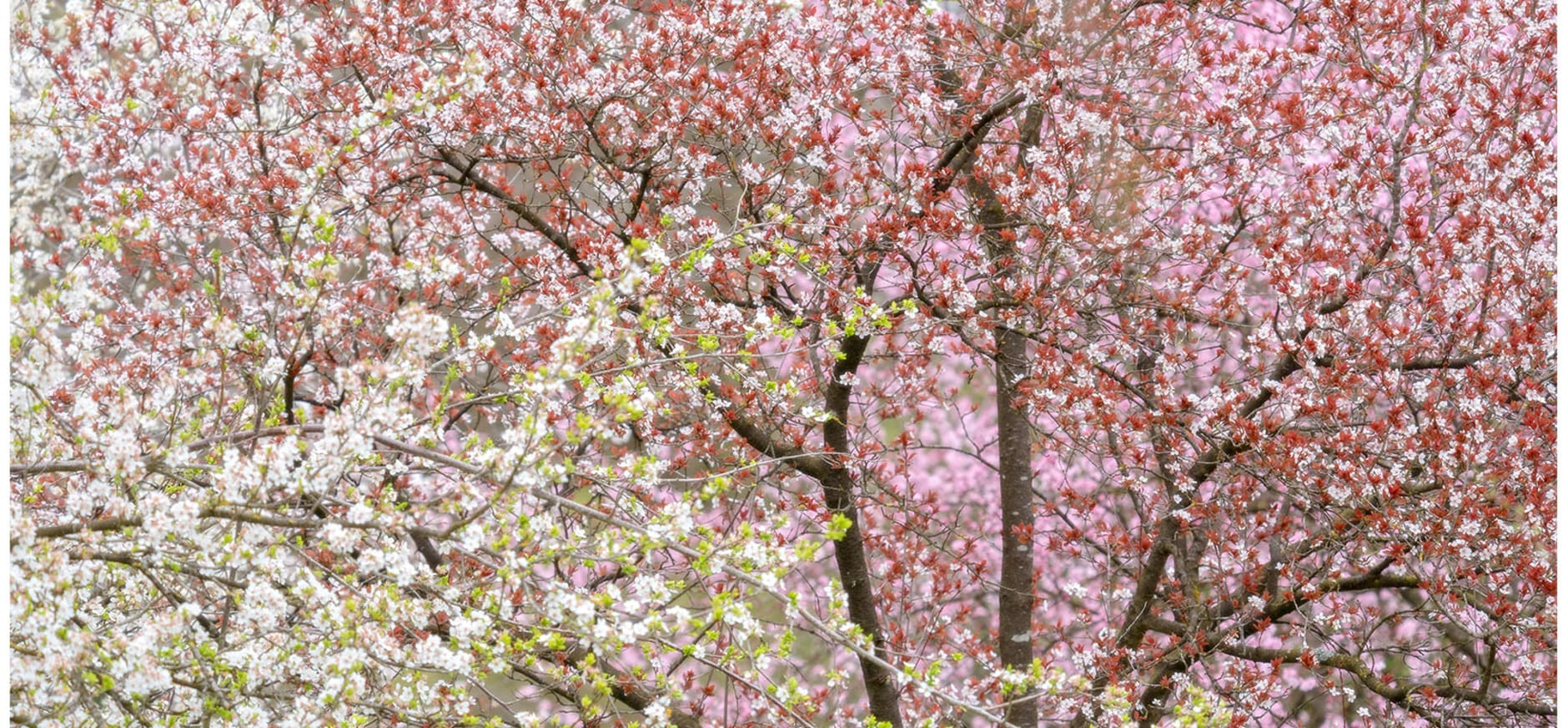 bloesem arboretum poort bulten