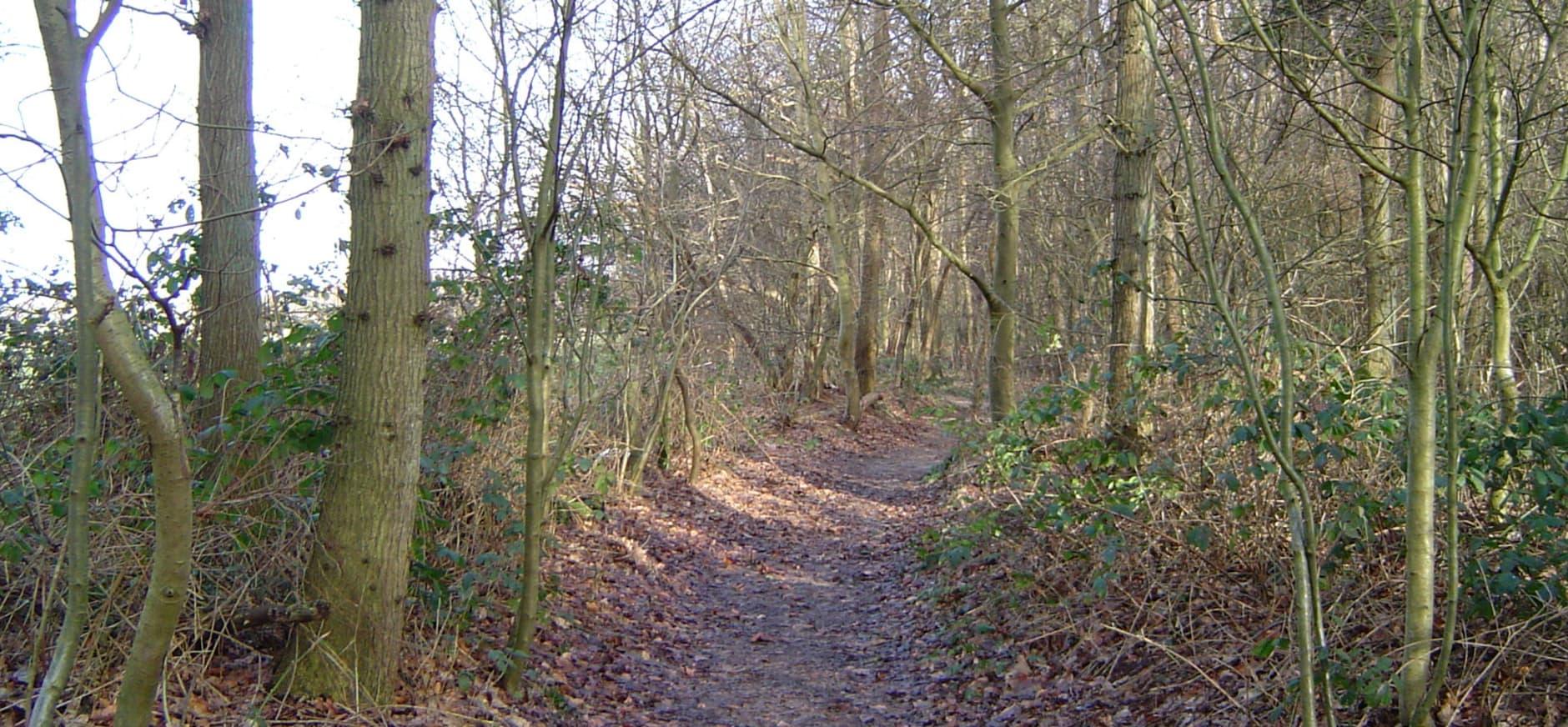 Bospad in het Overbos, Landgoed Nijenburg