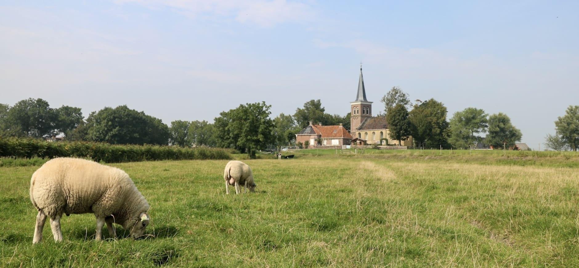Catharinakerk Lions