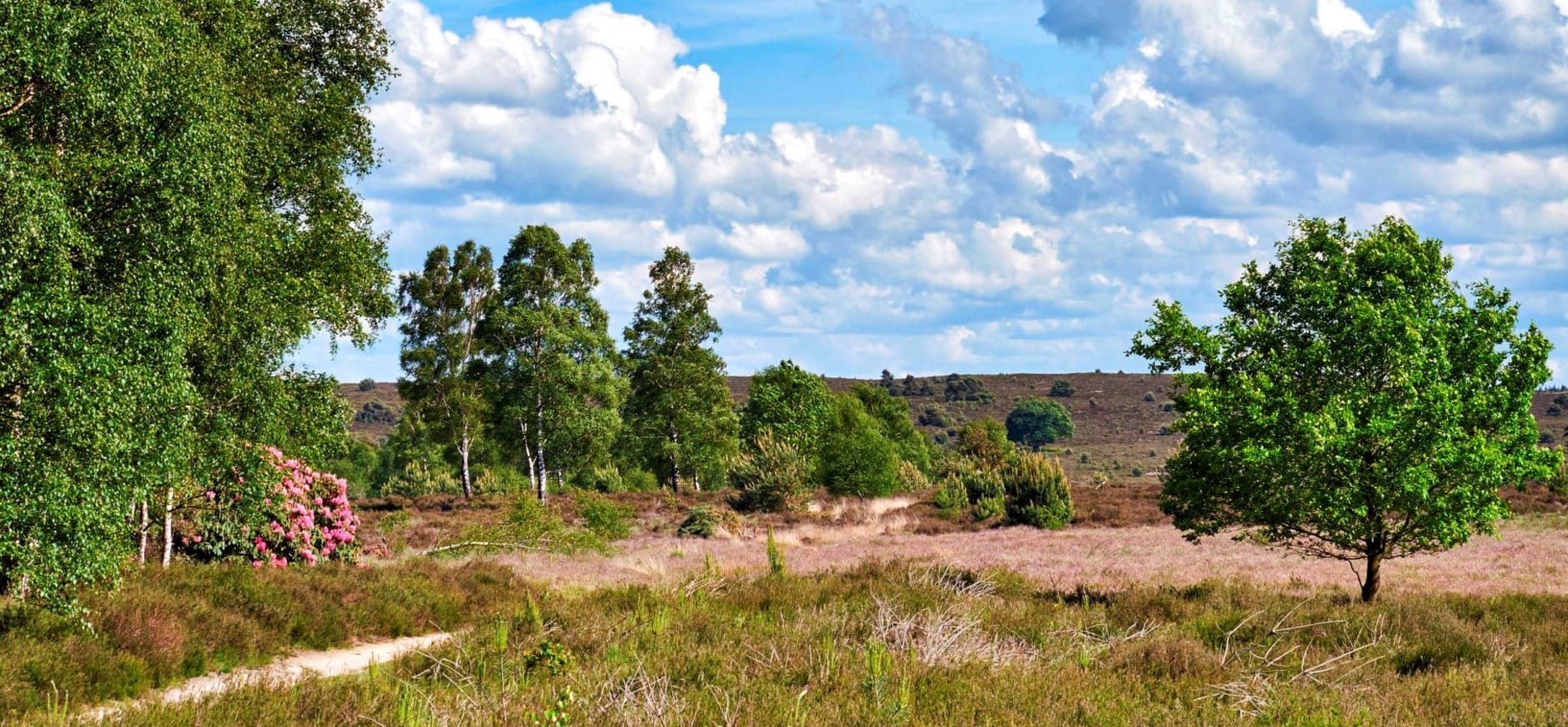 Sallandse Heuvelrug met uitgestrekte vergezichten heide bos en bloeiende rododendrons