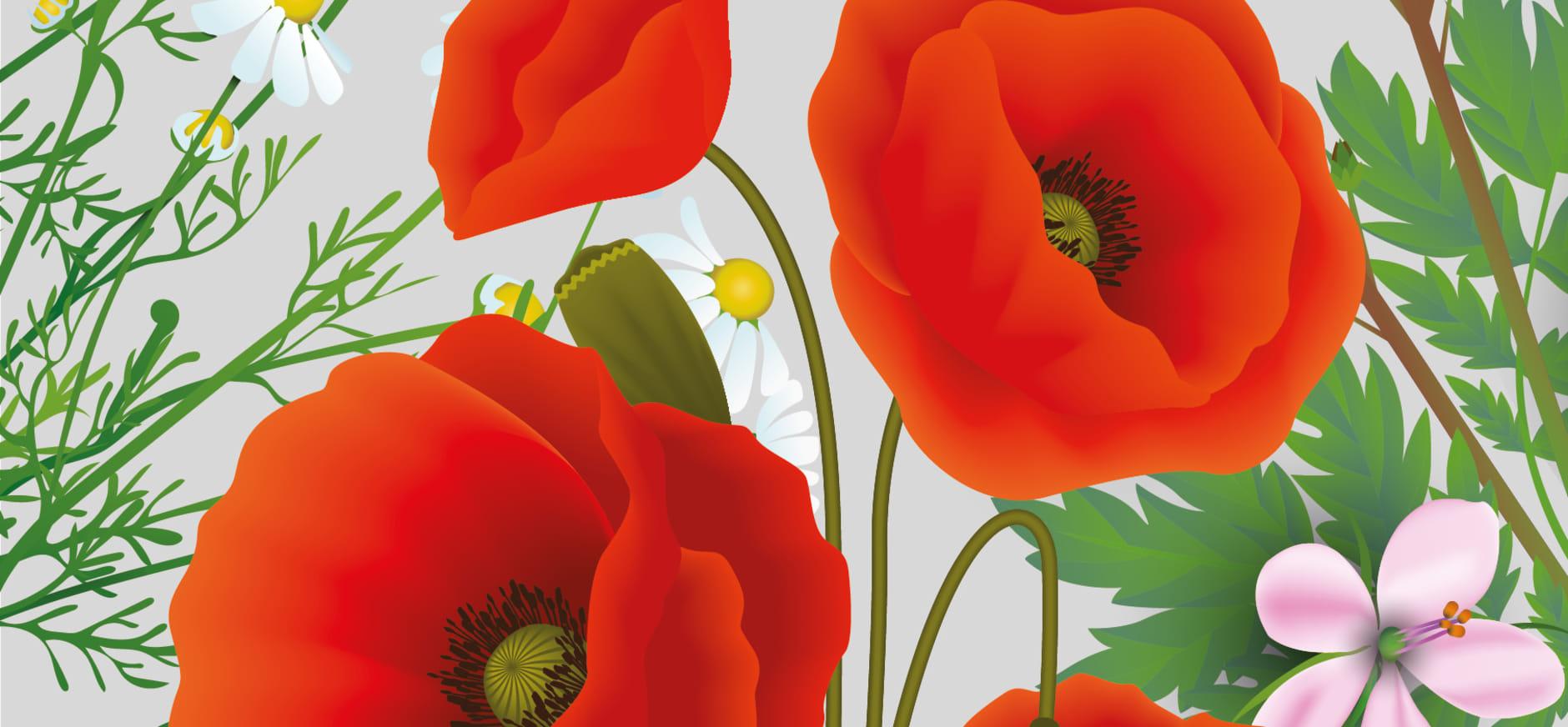 Wilde bloemen expositie in Natuurhistorisch Museum Rotterdam