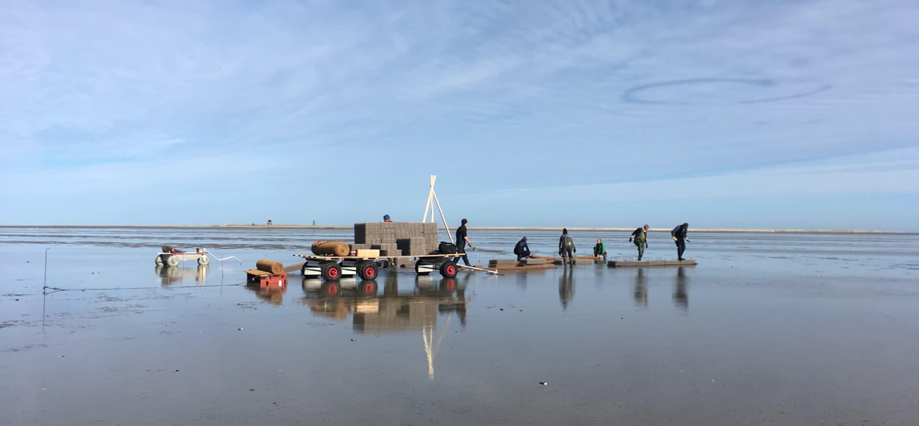 Start onderzoek rol mosselbanken en zeegrasvelden op voortbestaan Griend