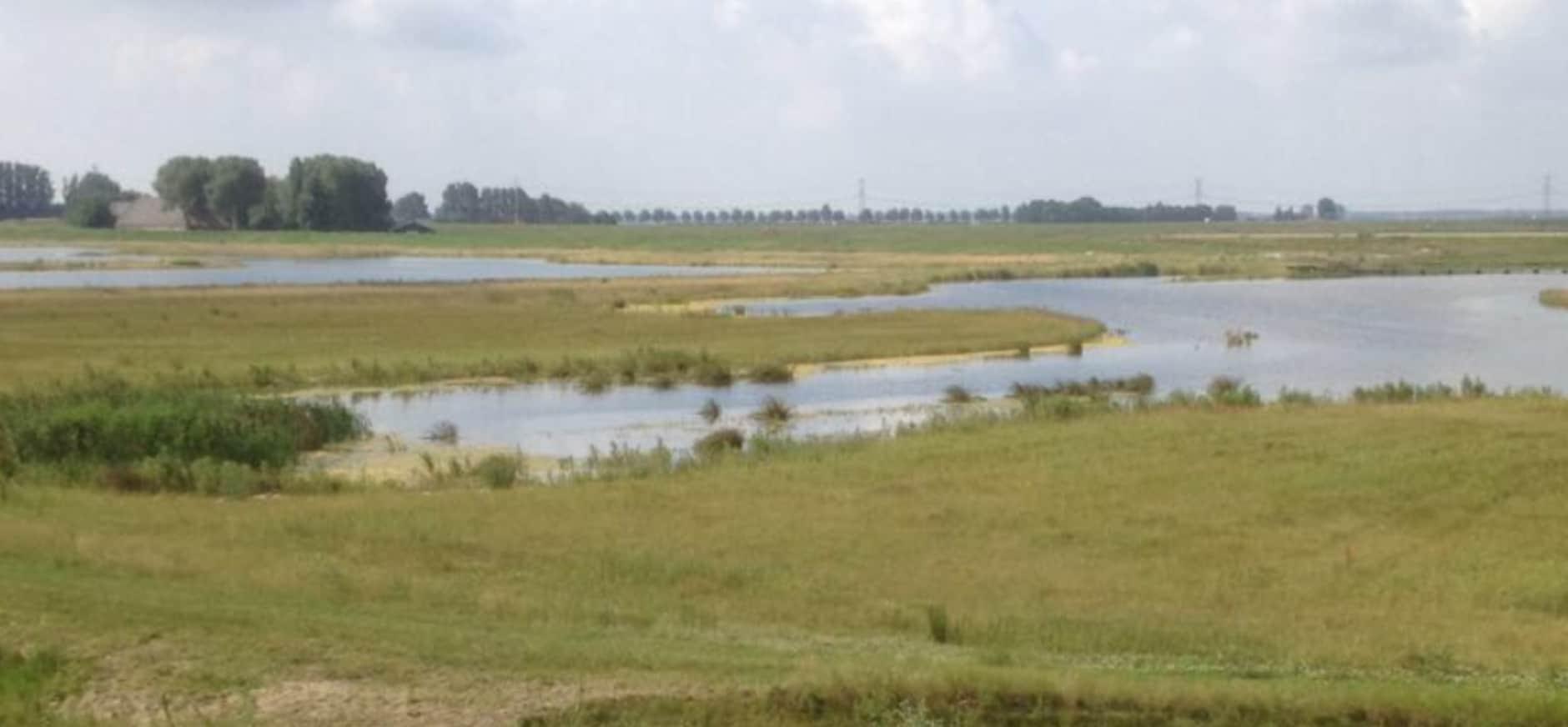 Nieuw natuurgebied aangekocht bij Spijkenisse