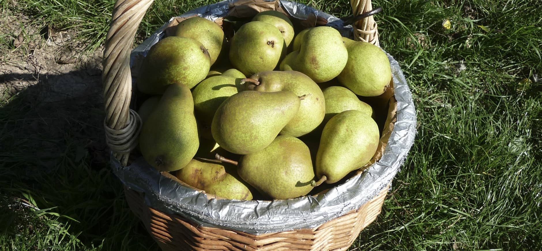 Fruit plukken in de boomgaard bij Zwaakse Weel