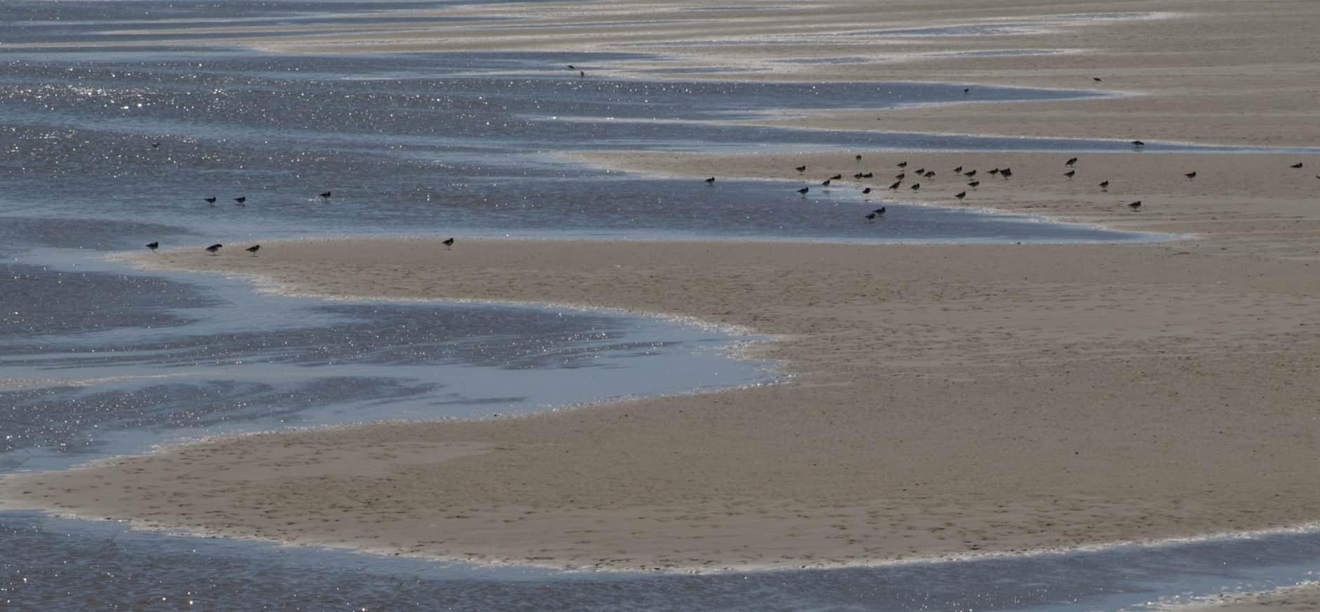 Natuurorganisaties vechten vergunning zoutwinning voor de rechter aan