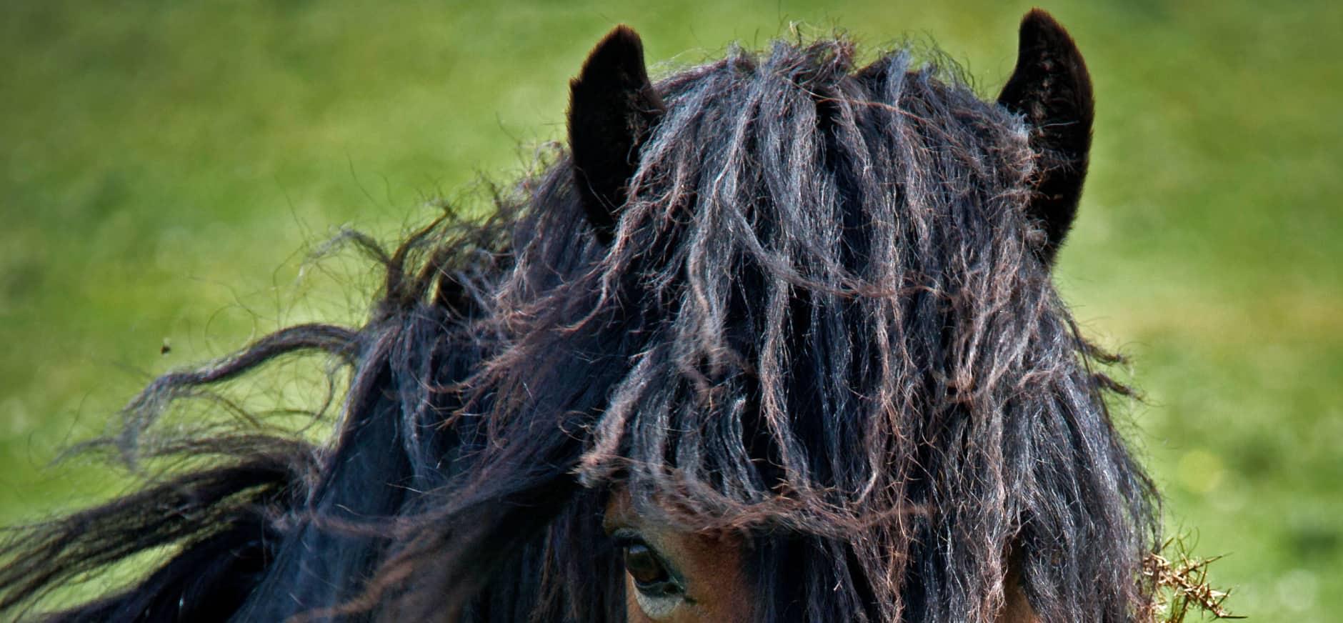 Exmoor pony's voor De Onlanden