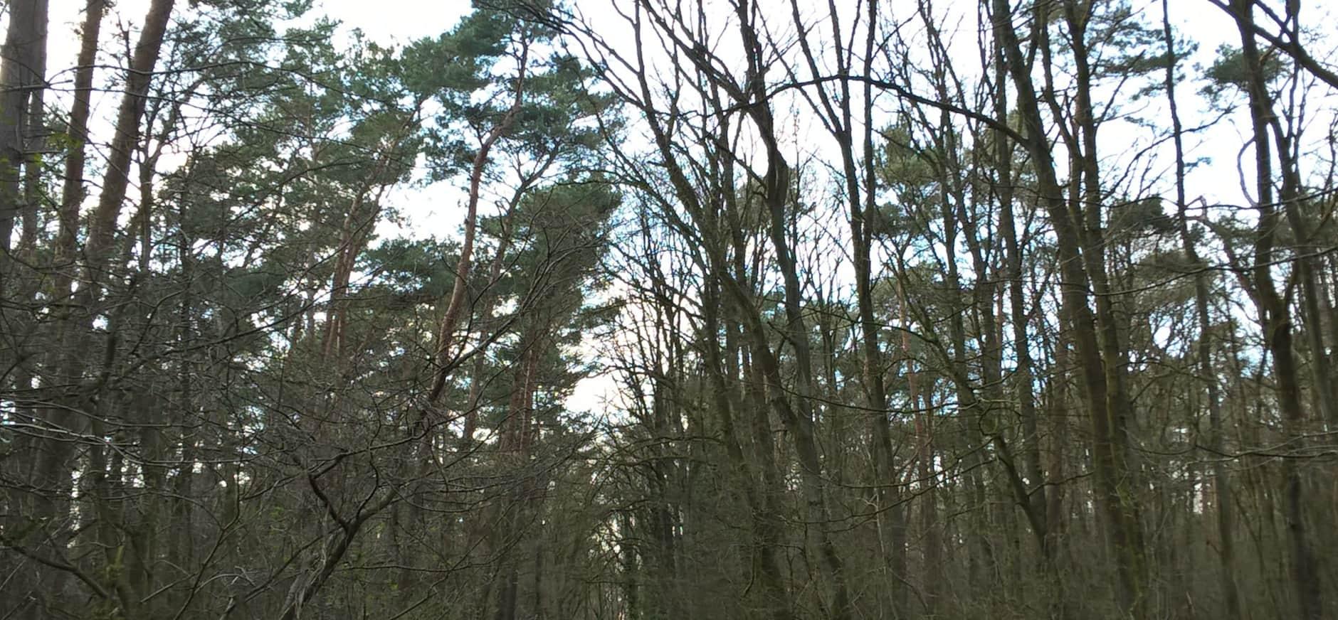 Start boswerkzaamheden Breukberg Schinveld