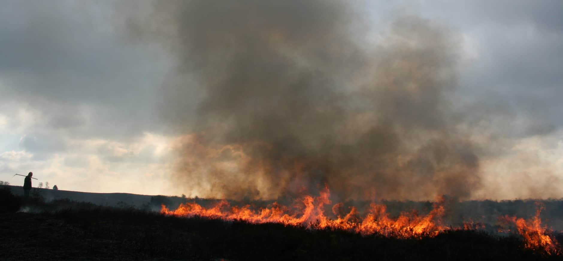 Brand legt enkele hectares heide Mantingerveld in as