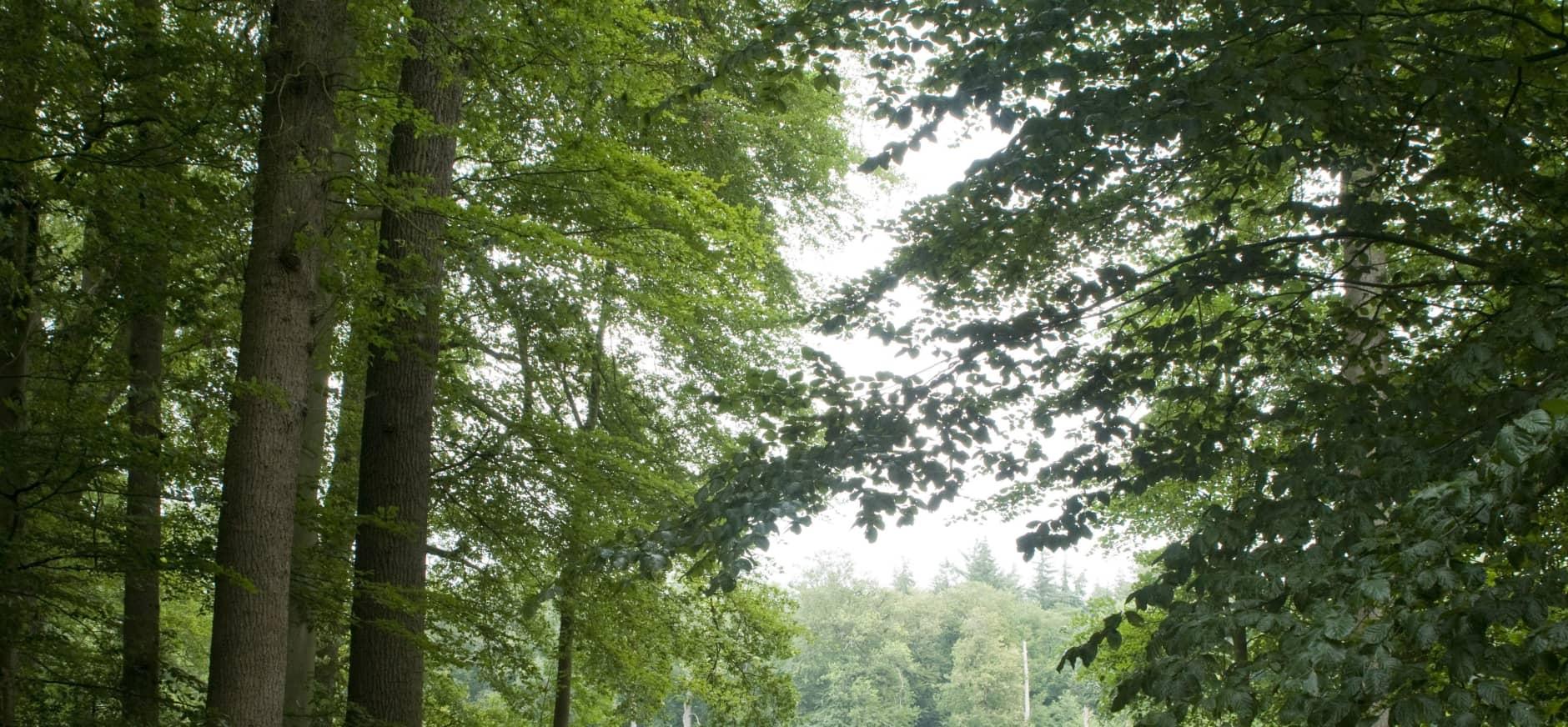 Keltische bomenroute Colckhof