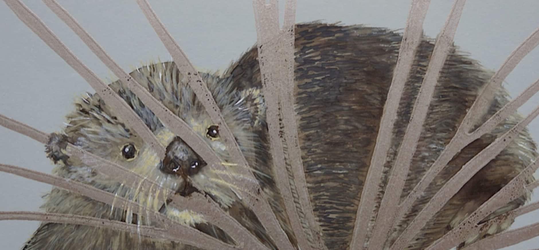 Bezoekerscentrum Nieuwkoopse Plassen viert geboorte van otterjongen met kunstexpositie
