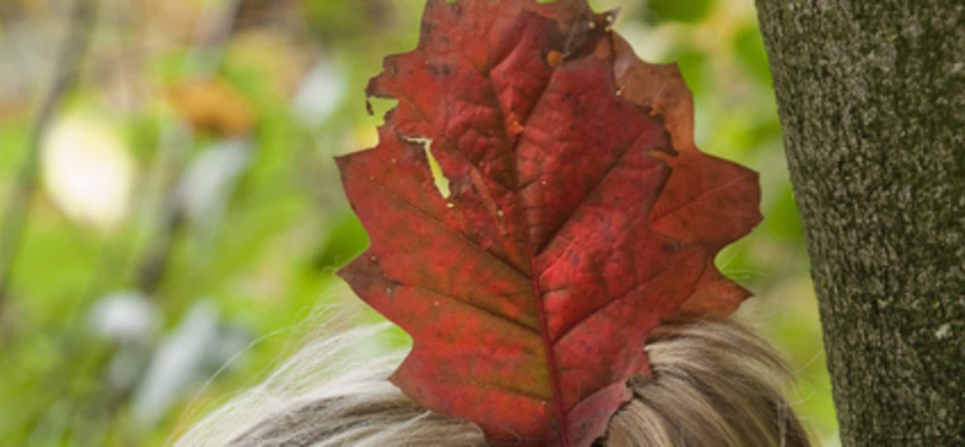 Maak een herfstkroon van bladeren