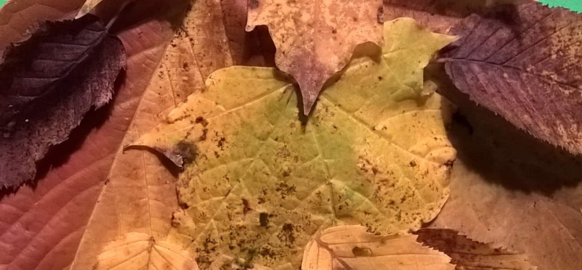 Dierenfiguren maken van bladeren