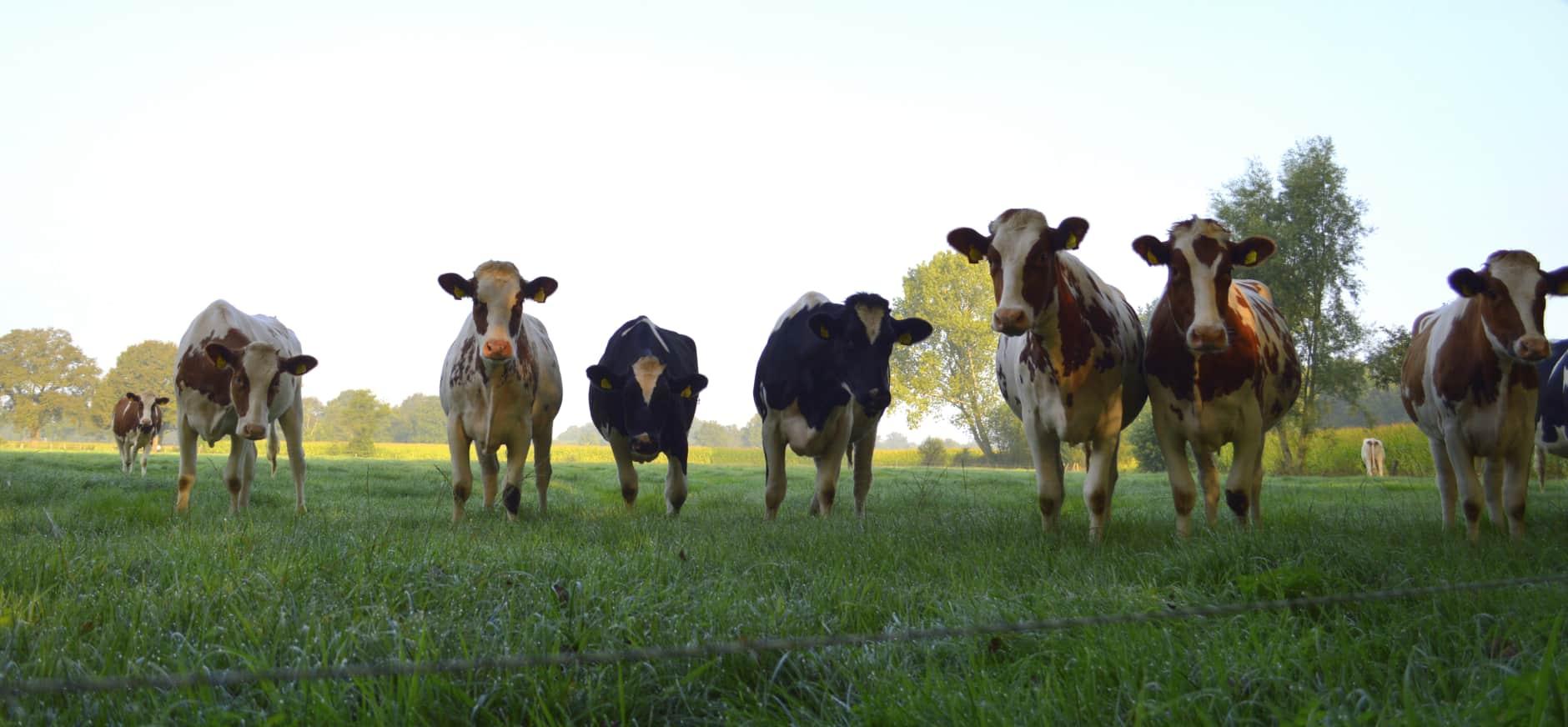 Melkveesector moet verantwoordelijkheid nemen