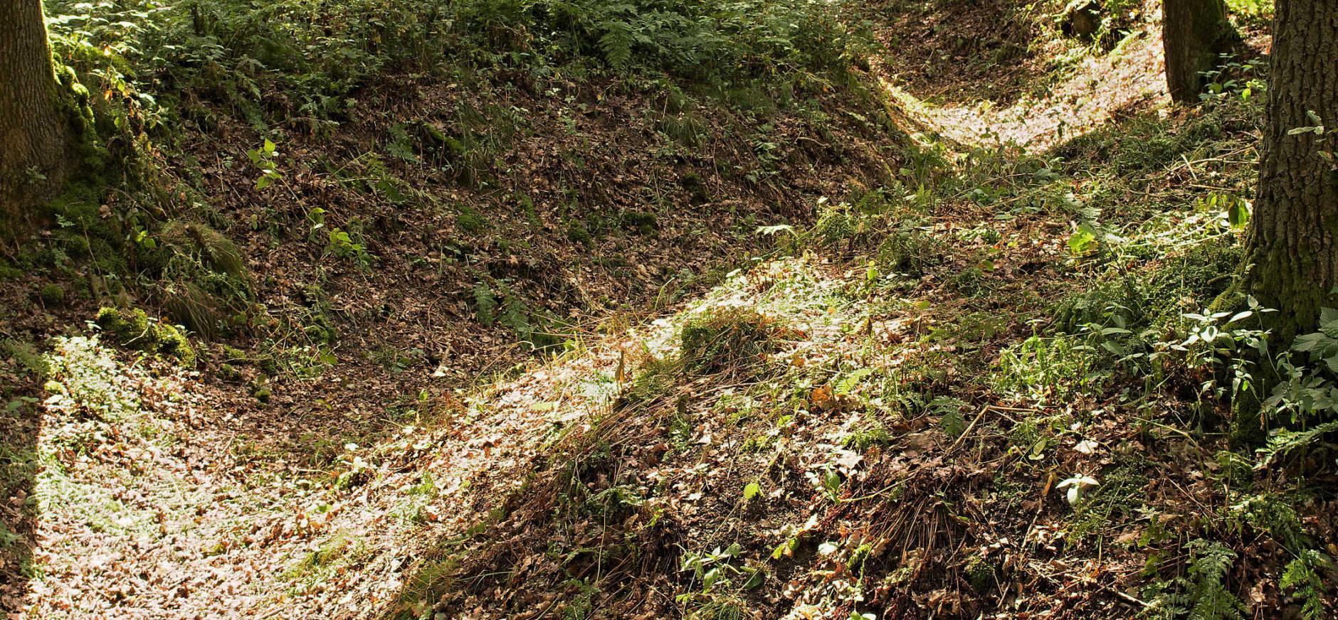 Militaire relicten in het Bergherbos