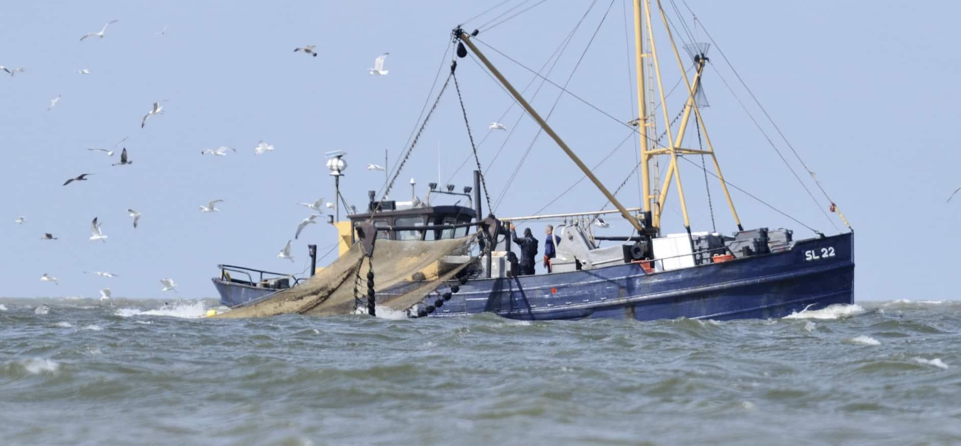 Garnalenvissers krijgen label voor duurzaam vissen