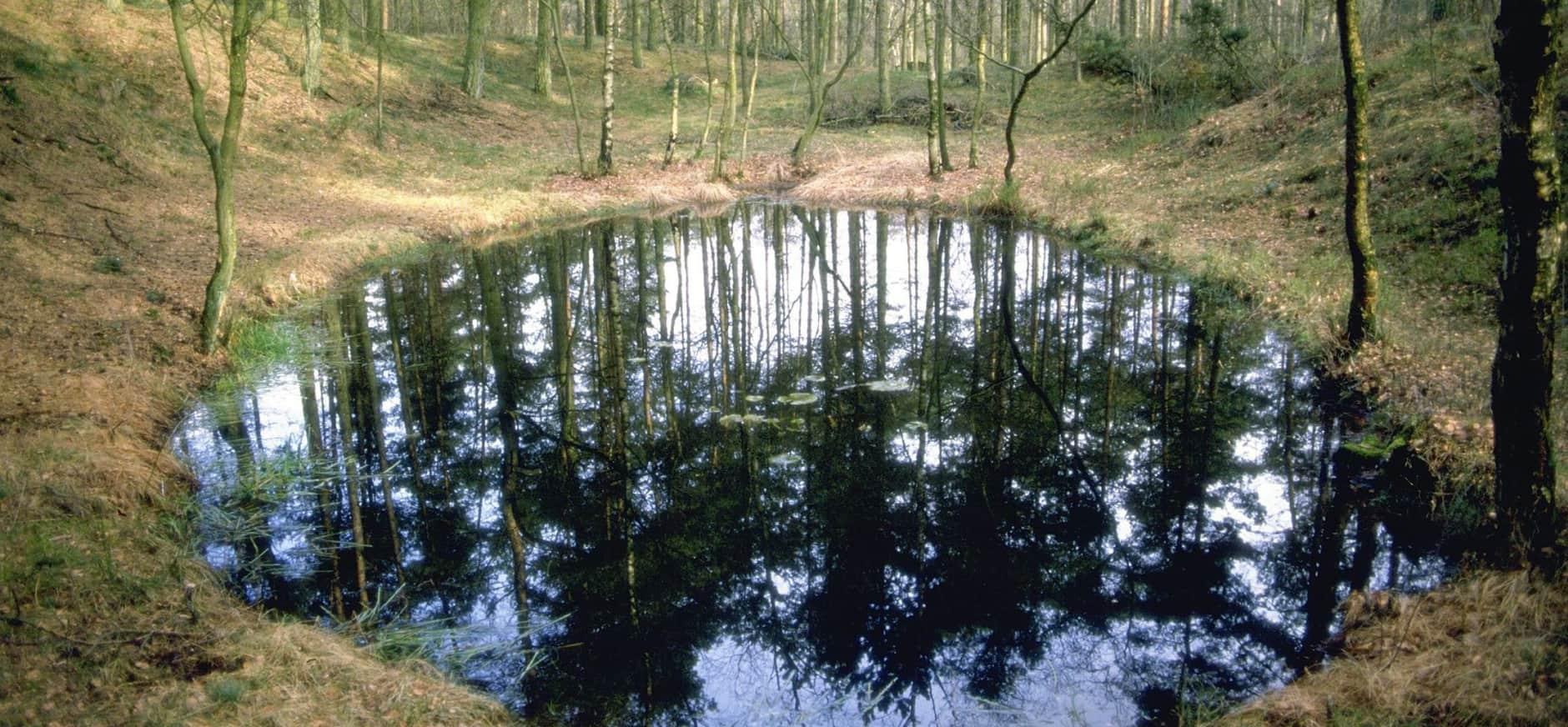 Water in natuurgebied Munsterman