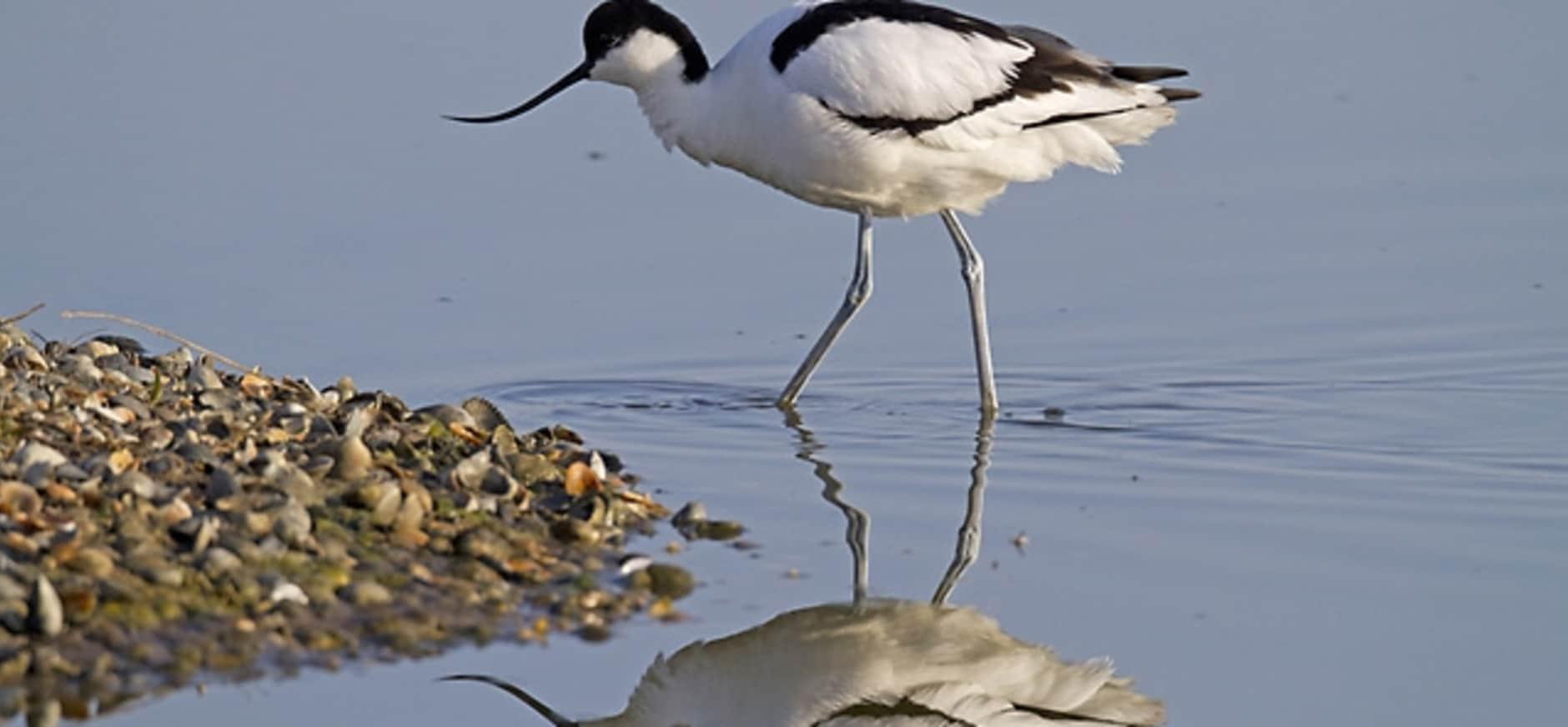 Recordaantal broedvogels in Waverhoek