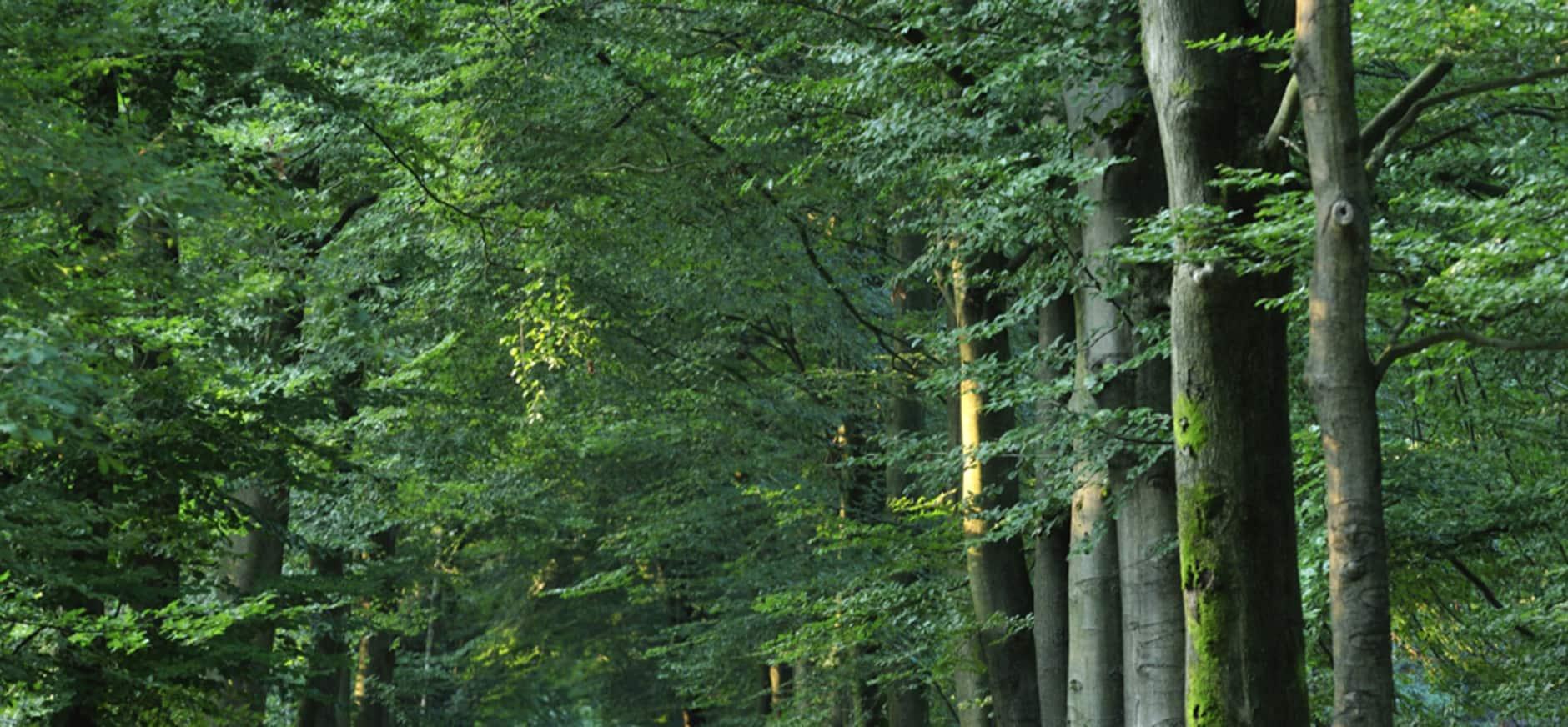 Volg de boswachter van Heumensoord, Mookerheide en de Sint-Jansberg op Facebook