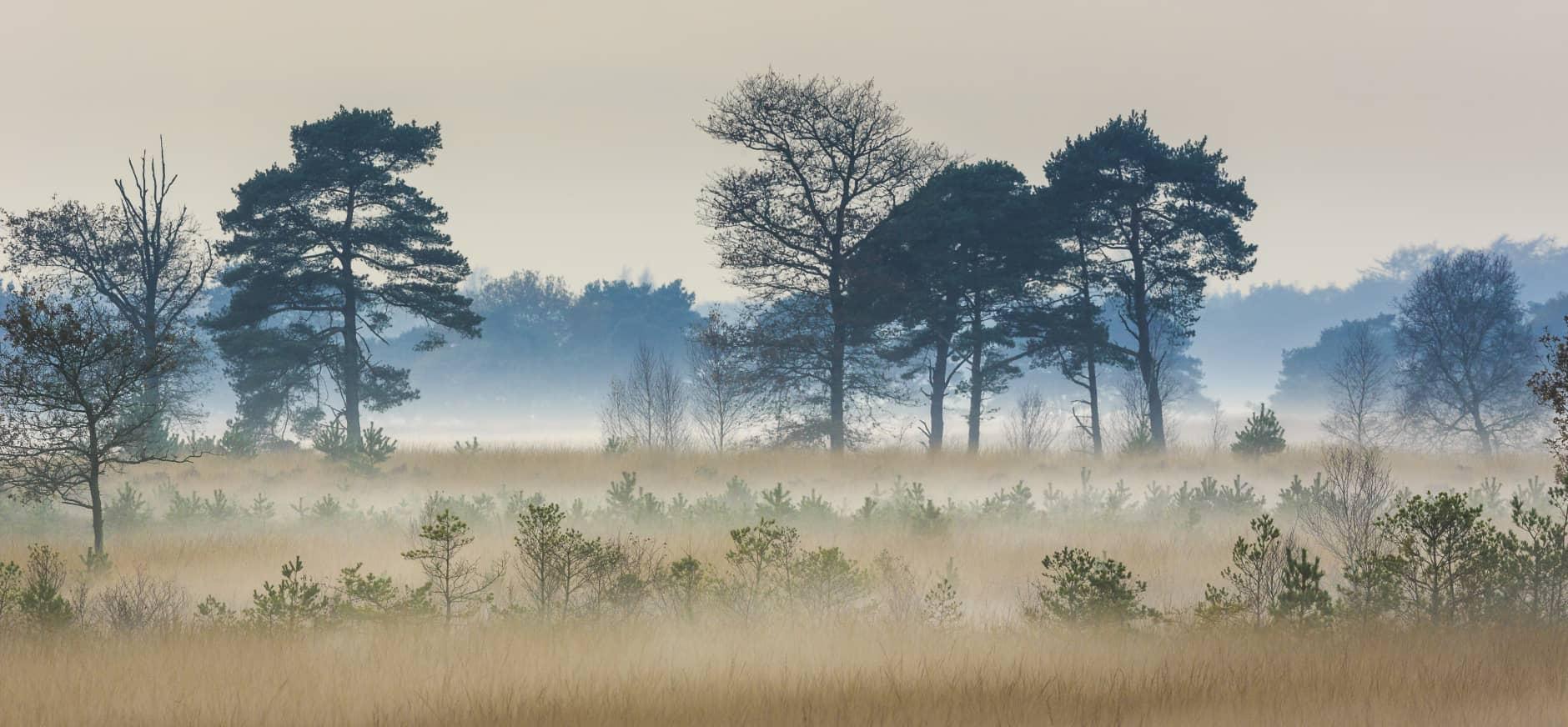 Vrijwillige boswachters aan de slag in Drents-Friese Wold