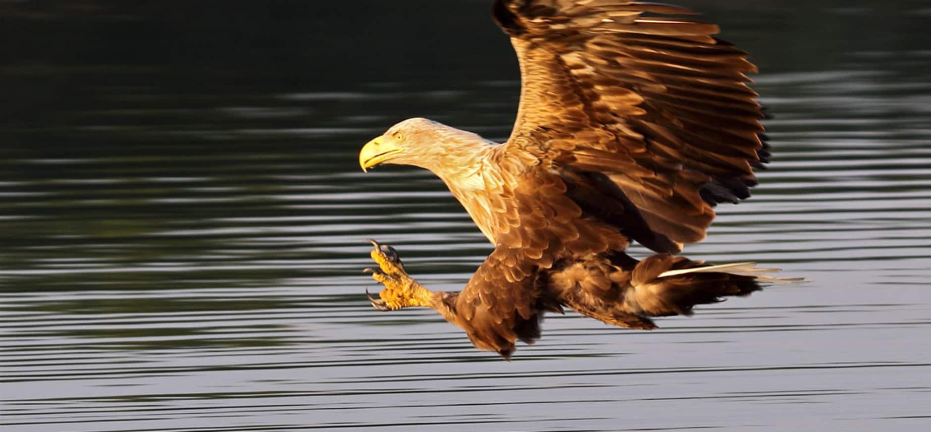 Harderbroek: wandelen door een vogelparadijs