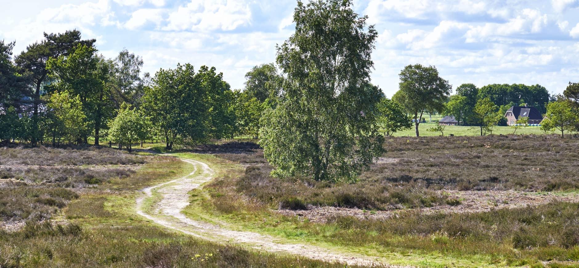 Heideherstelmaatregelen Sallandse Heuvelrug uitgesteld