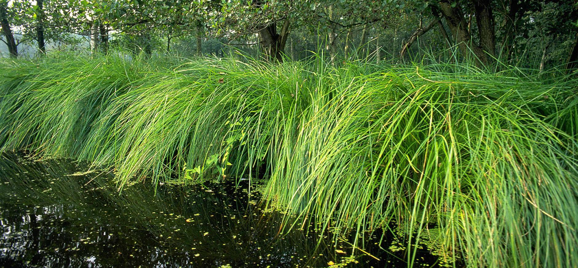 Waterkant van De Nes