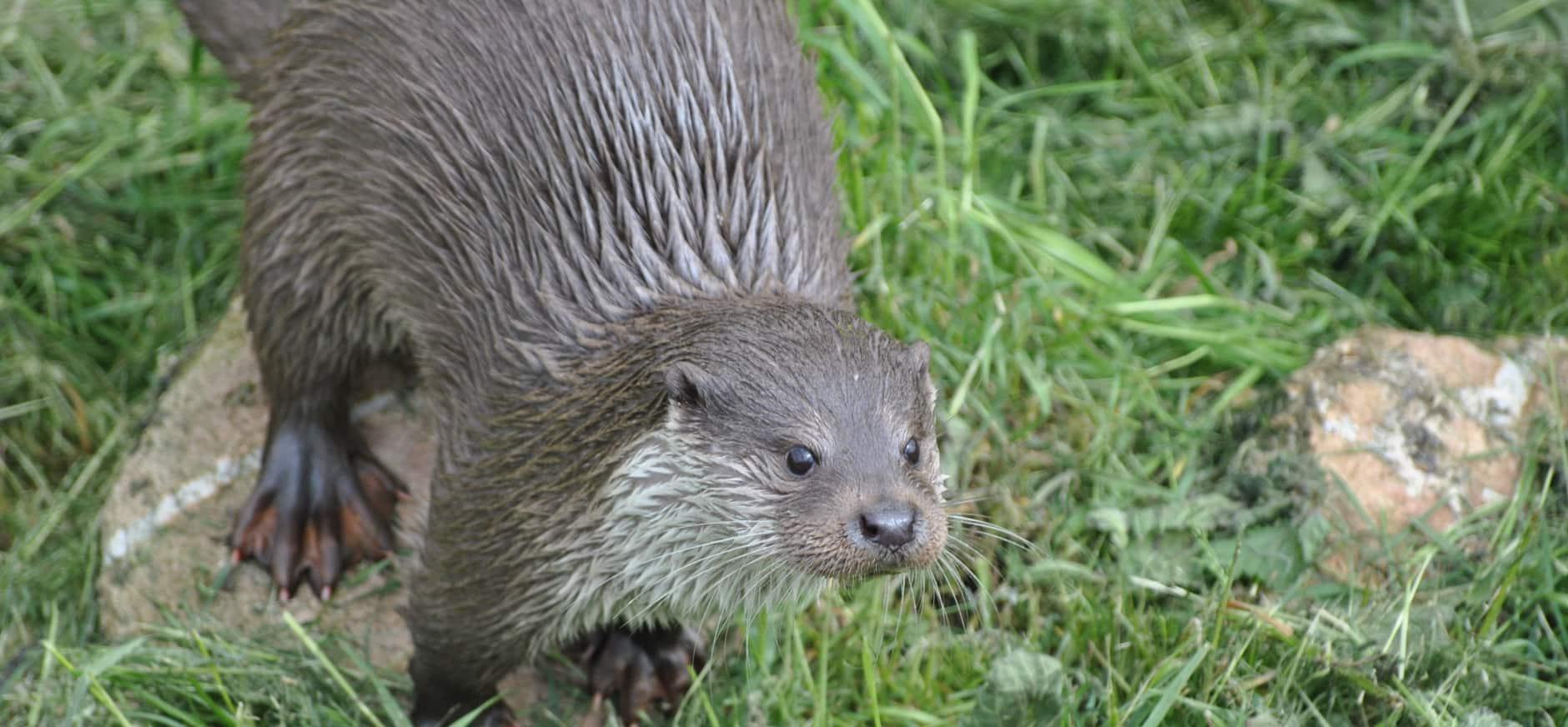 Speurtocht Otje de Otter (4 t/m 8 jaar)