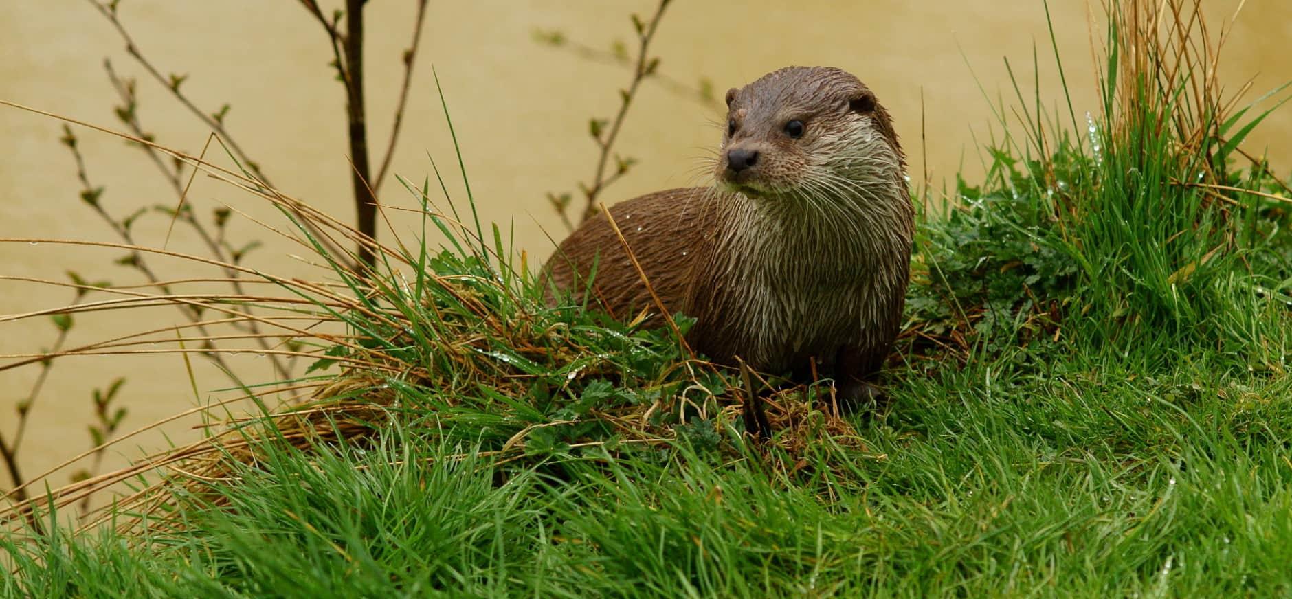 Ottersporen zoeken