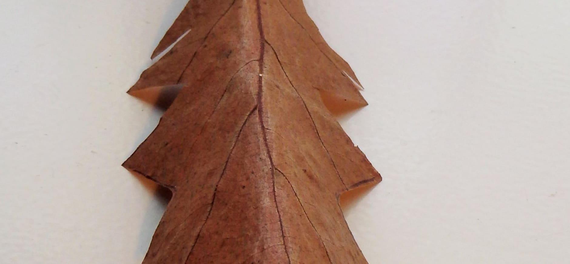 Bladerbeesten maken