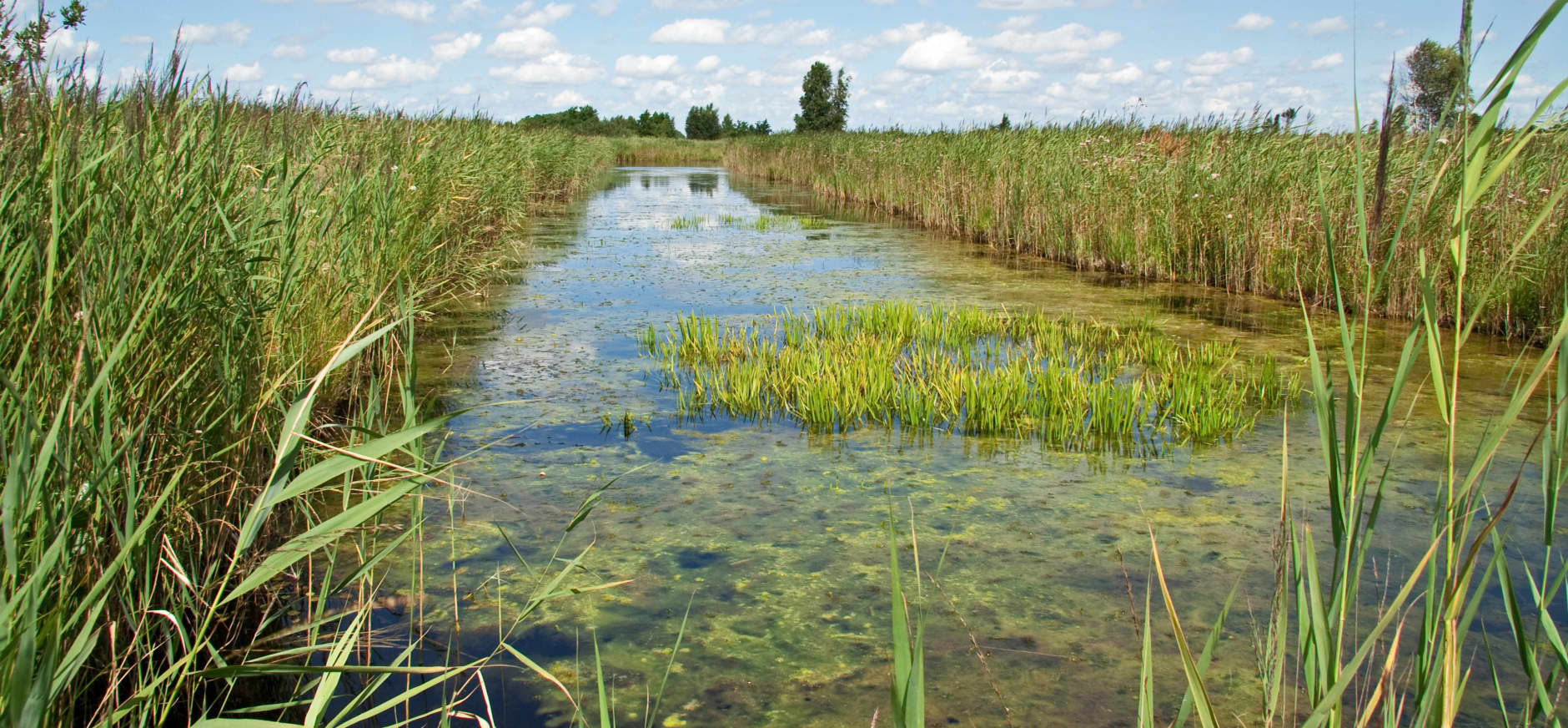 Herstel veenlandschap in Kortenhoef en Ankeveen