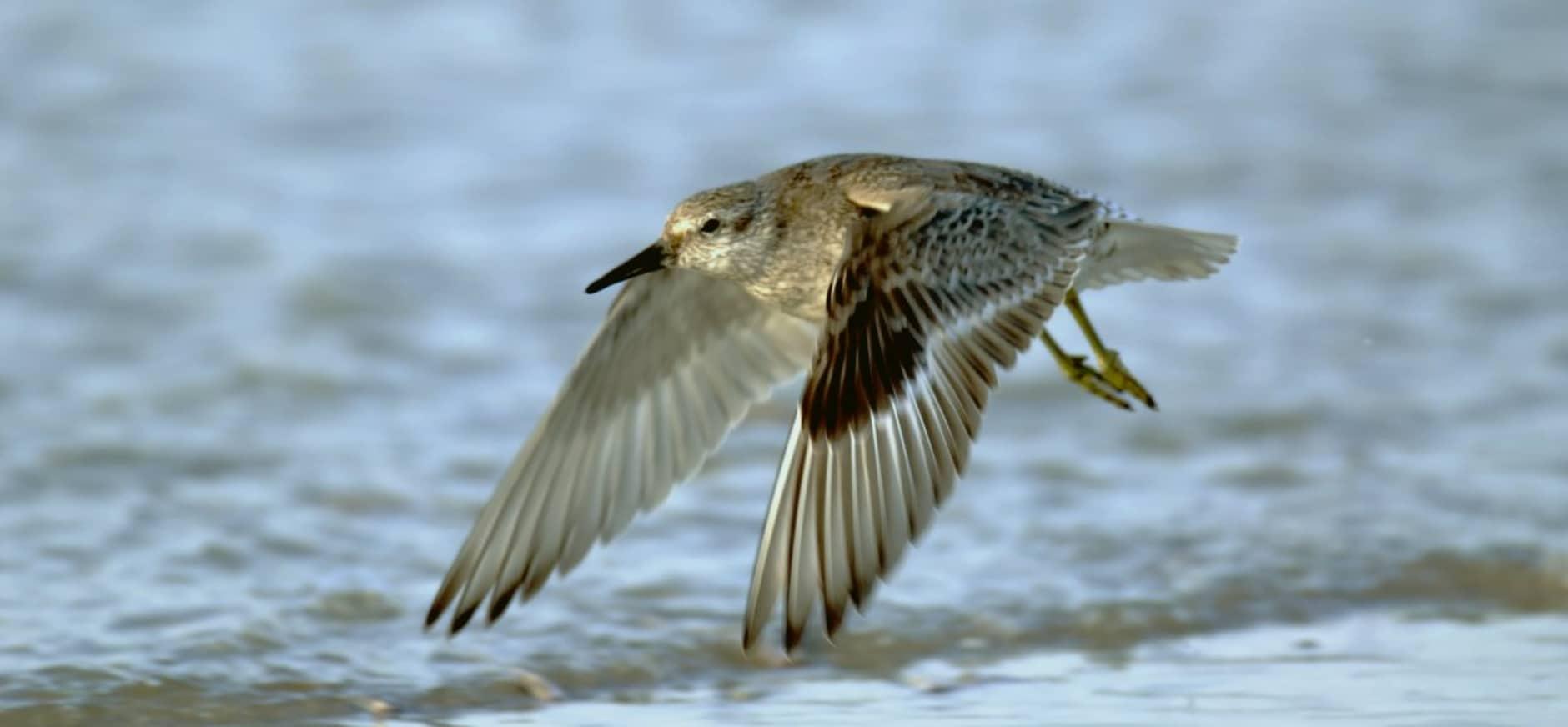 Natuurorganisaties willen openheid rond zoutwinning