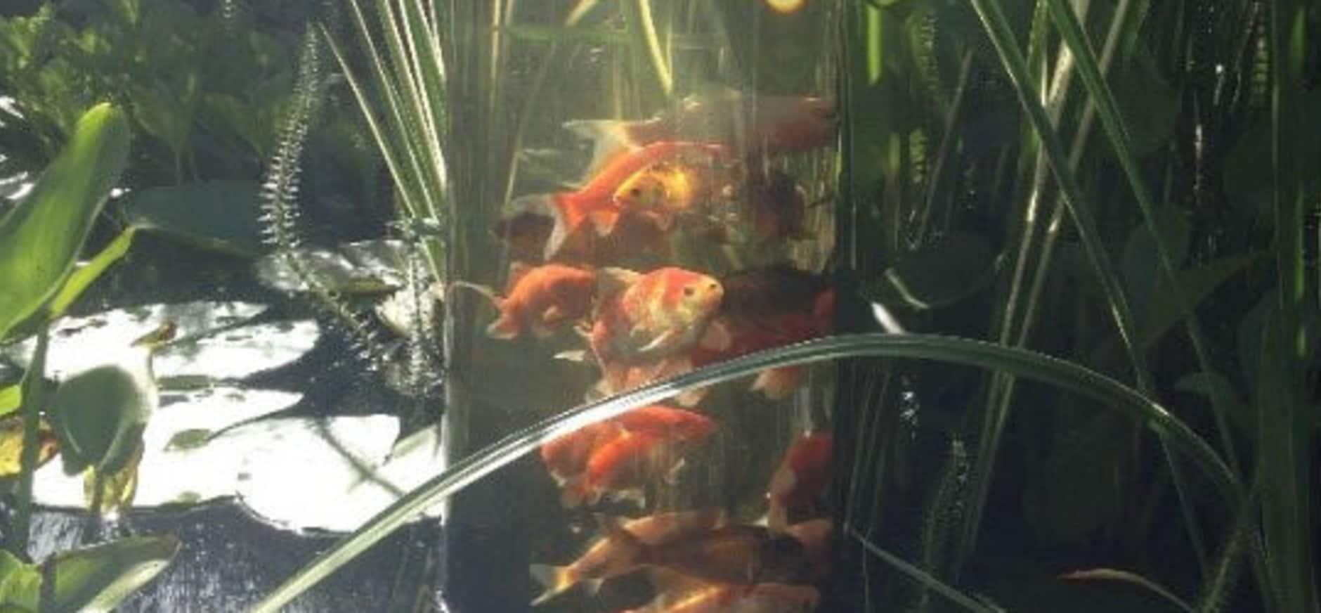 Spannende onderwaternatuur zichtbaar met vis-cilinder