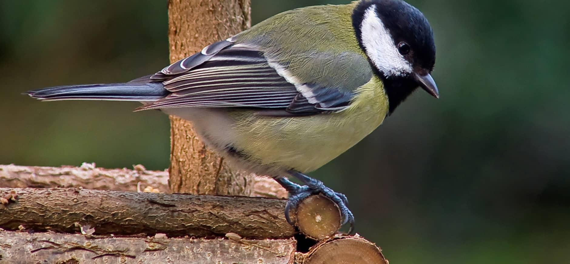 Vogeltjes voeren