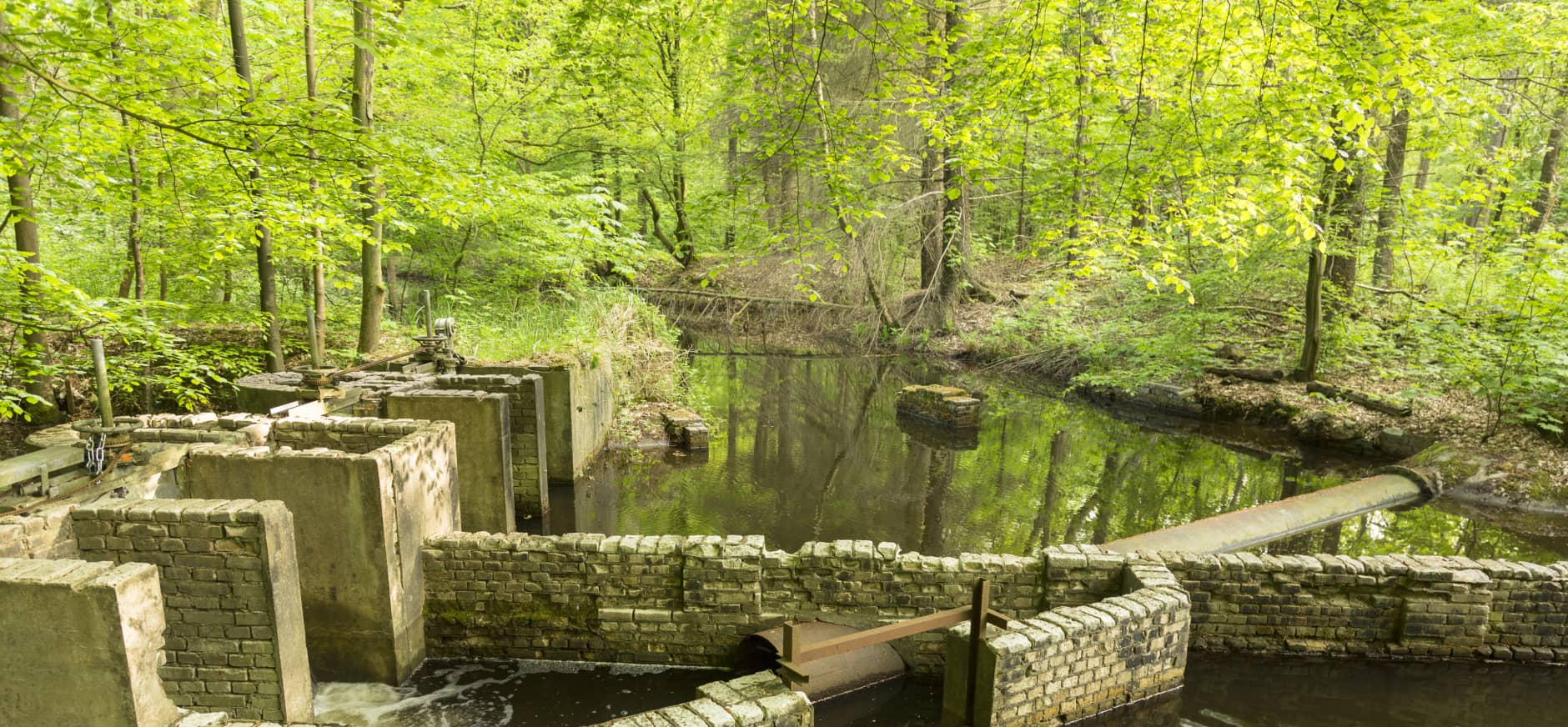 Groepsexcursie Waterloopbos- Wandelen met waterbouwkundig gids