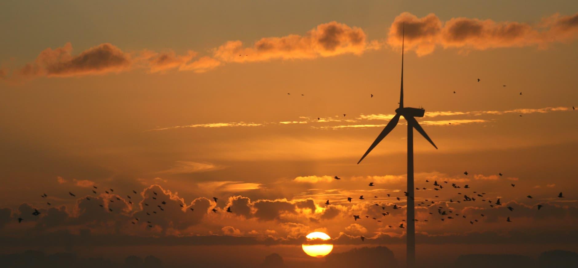 Optie windmolens zuidoever Hoeksche Waard van de baan